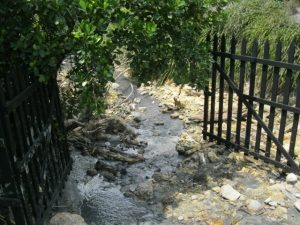 St Lucia Volcanic Mud stream